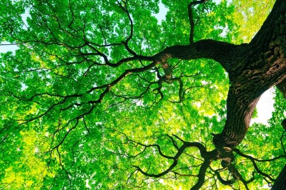 arbre des causes